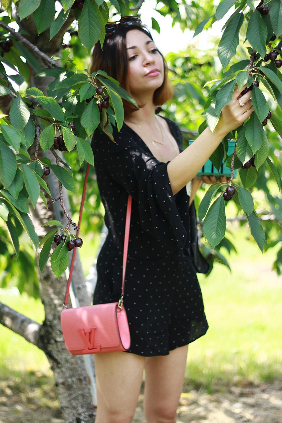 westview-orchards-cherry-picking-michigan11