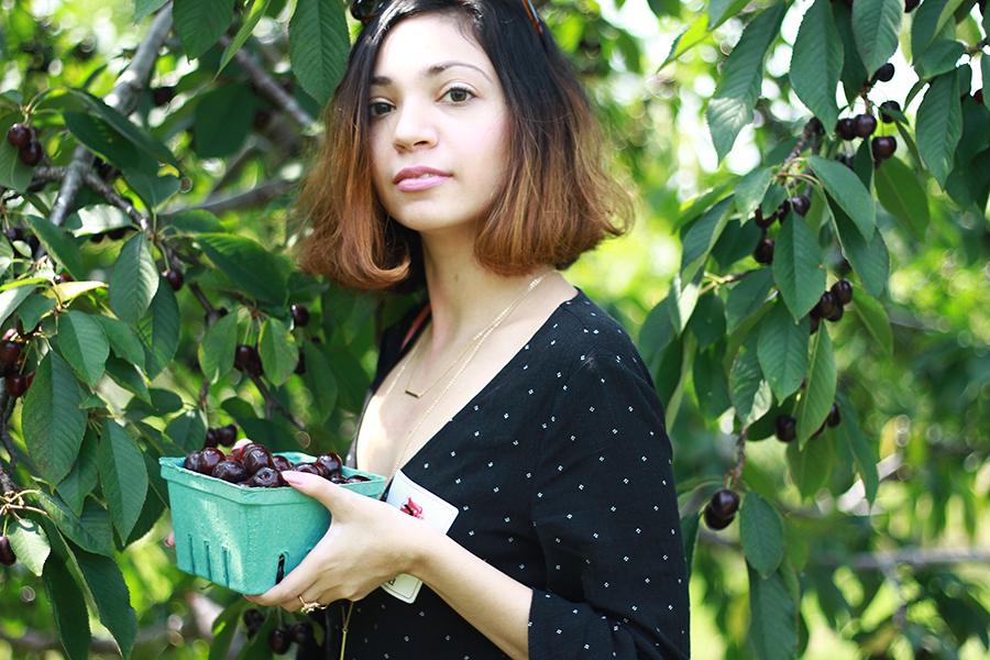 westview-orchards-cherry-picking-michigan13