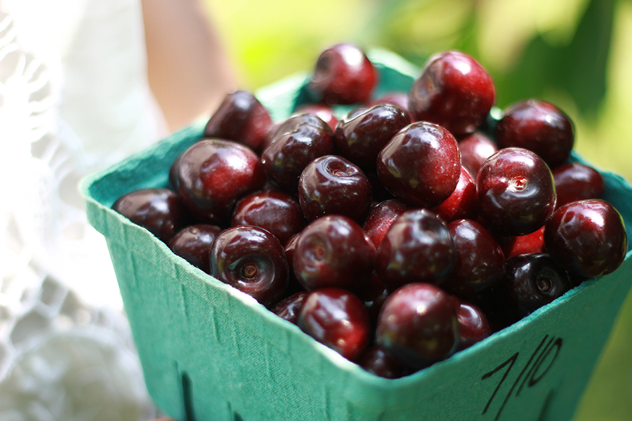 westview-orchards-cherry-picking-michigan2