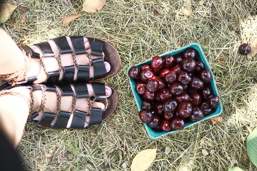 westview-orchards-cherry-picking-michigan3